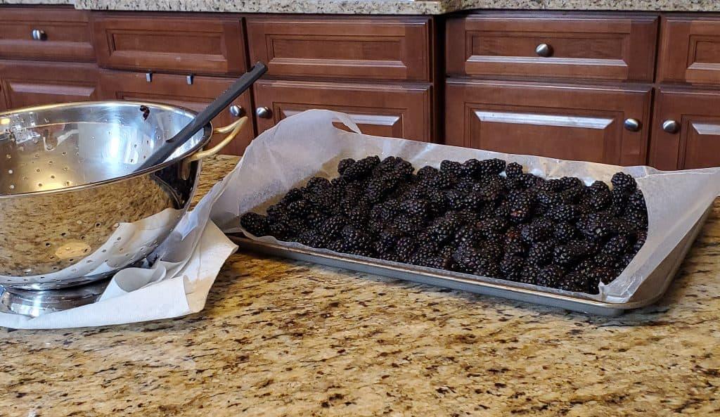 Photo   Preparing berries for flash freeze